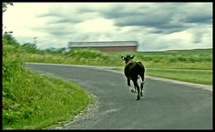 run with the bull | Flickr - Photo Sharing!
