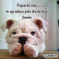 ÓTIMO DIA A TODOS! ❤❤ #amorincondicional #cachorro #filhode4patas #maedecachorro #paidecachorro #gato #amogatos #petshop #petmeupet #petshoponline #boanoite