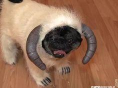Wampa Dog Costume