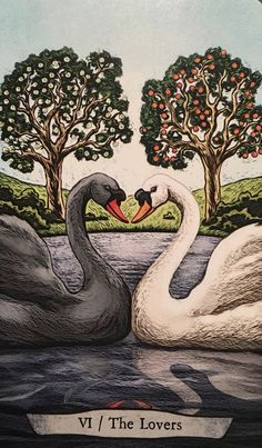"March 16/2017 Daily Angel Oracle Card: The Lovers ~ Swan, from the Animal Totem Tarot, by Leeza Robertson artwork by Eugene Smith The Lovers ~ Swan: ""Come be with me and let me marvel in the You that is al…"