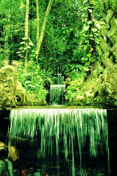 Rio de Janeiro Botanical Garden, Brazil via flickr