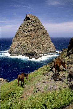 Wild horses and rock on the Island of Ua Huka, Marquesas Islands, French Polynesia.