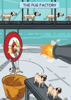 How Pugs Are Made