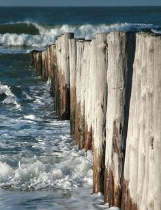 Ocean love. . . . . .