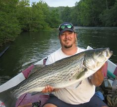 Carlos Gonzalez Striped Bass Fishing on Lake Ouachita