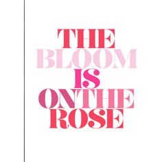 The Bloom Is On The Rose ❤ liked on Polyvore featuring text, words, filler, phrase, quotes and saying