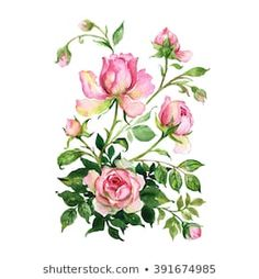 Similar Images, Stock Photos & Vectors of Watercolor drawing of a branch with leaves and flowers. Composition of pink roses, wildflowers and garden herbs Decorative bouquet isolated on white background. Simple Watercolor Flowers, Easy Watercolor, Watercolor Drawing, Simple Rose, Rose Bouquet, Botanical Illustration, Vintage Floral, Pink Roses, Wild Flowers