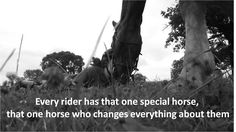 Special horses. <3