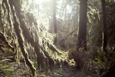 Olympic National Park #17