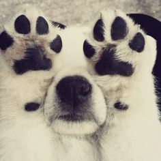 is there anything better than puppy paws? honestly