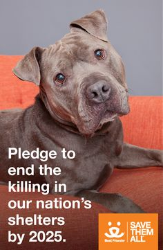 Imagine a future in which every pet is safe — a time when they are never killed in shelters, simply because they don't have safe places to call home. That future is closer than you think.  Best Friends has set a bold new goal to end the killing of dogs and cats in shelters nationwide by 2025 — and you can help. Take the pledge to save our best friends and end the killing in America's shelters by 2025. Because together, we can Save Them All!