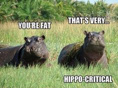 15 Hilarious Hippo Memes 24 lol so True Funny Quotes 35 Funny Minions quotes and sayings Putting on skinny jeans be like: *wiggle* *wiggle* *pull* *bunny hop* *squat* *strut like a boss.forgets to zip* Humor on Share Sunday 12 Things You'll Re. Animal Captions, Animal Puns, Funny Animal Memes, Funny Animals, Animal Humor, Funny Shit, Funny Puns, Haha Funny, Funny Stuff
