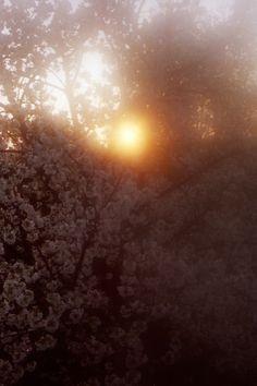 Blüten im Abendlicht - S. Hopp