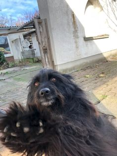 What's that thing? Lemme touch it! Selfies, Touch, Dogs, Animals, Animales, Animaux, Pet Dogs, Doggies, Animal