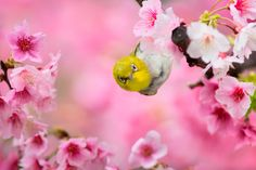Photograph Hello by FuYi Chen on 500px
