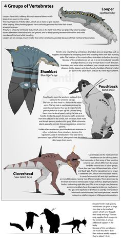 4 vertebrate types by Purple-Plasmid on deviantART