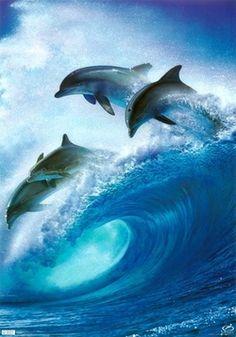 animals dolphins blue ocean water joyful moment
