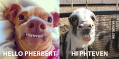 Phteven meets Pherbert - 9GAG Funny Chicken Memes, Funny Dog Memes, Funny Cartoons, Pheven Dog, Funny Photos, Best Funny Pictures, Tuna Dog, Super Cute Dogs, Funny Love