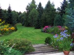 Summer in my garden.