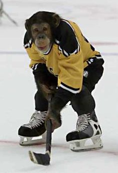 """""""All the scientists are running around looking for the monkey but he can't be found cause he's down by the pond playing hockey with the kids"""" - The Zambonis"""