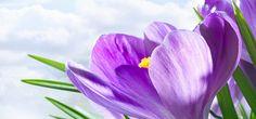6 Benefits of Lavender Flower