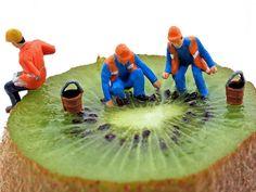 Kiwi Seeders