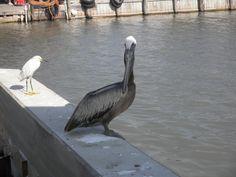 Coastal Birds, Seadrift, Tx
