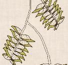 ROSEMARY HALLGARTEN | DRAGONFLOWER | Printed Fabric AVAILABLE THROUGH ALT FOR LIVING