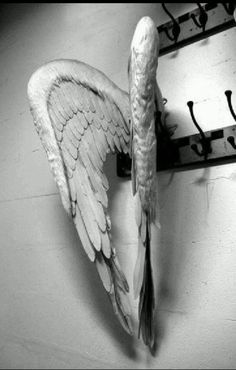 """Hai salvato la mia vita Tu, il mio angelo senza ali *** You saved my life You, my angel without wings (Negrita, da """"Vola via con me - Fly away with me"""") Angels Among Us, Angels And Demons, Fallen Angels, Ange Demon, Angel Wings, Photos, Pictures, Black And White, White Art"""