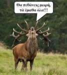 olympia.grΓια την Ελλάδα με όπλο την αλήθεια. Μαθαίνοντας τη φύση, την κοινωνία, τον εαυτό μας. olympia.gr Olympia, Animals, Animales, Animaux, Animal, Animais