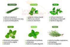 Quels sont les bienfaits des herbes aromatiques pour la santé ?