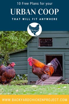 Urban chicken coop plans come in all shapes and sizes, from functional to fancy! Find your perfect DIY chicken coop today! Moveable Chicken Coop, Urban Chicken Coop, Walk In Chicken Coop, Chicken Coop Pallets, Backyard Chicken Coop Plans, Small Chicken Coops, Easy Chicken Coop, Raising Backyard Chickens, Chicken Coop Designs