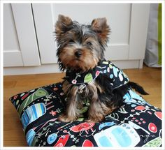 Nati's Little Things: Puppy travelling kit