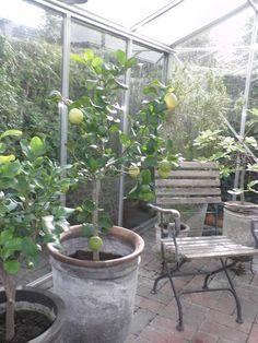 Sven & Anitas trädgård... fantastisk!!!