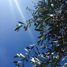 Oliivipuu Clouds, Outdoor, Italia, Outdoors, Outdoor Games, Outdoor Living, Cloud