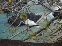 Arquipélago de Fernando de Noronha, fauna preservação ambiental, PE/ BR (gov pe)