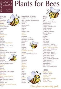 How to create a bee-friendly garden. These plants help attract bees. Current farming practices leave bees without enough food year-round. Help give bees something on which to thrive and plant some of these. Organic Gardening, Gardening Tips, Container Gardening, Vegetable Gardening, Succulent Containers, Container Plants, Succulents, Save The Bees, Bee Happy
