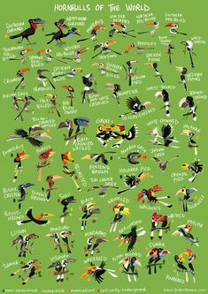 Tiger Species, Animals And Pets, Cute Animals, Wildlife Of India, Tropical Birds, Bird Illustration, Bird Drawings, Zoology, Bird Watching