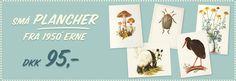 Gamle skoletavler, plancher og anskuelsestavler, rullekort skolekort, antikt verdenskort, retro europakort