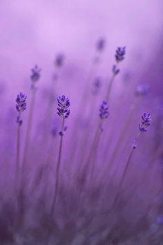 lavender color - Google Search
