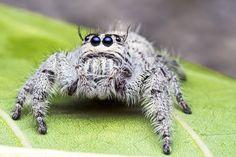 Hämähäkit maistavat, haistavat ja kuuntelevat jaloillaan. Niiden kahdeksaa jalkaa peittävät sadat karvat, jotka toimivat herkkinä aistineliminä.    Jalkojen karvat rekisteröivät maku- ja hajumolekyylejä ja auttavat hämähäkkejä myös etsimään puolison. Ne pystyvät rekisteröimään myös ilmassa tapahtuvaa mikroskooppista liikettä, kuten ääniaaltoja.