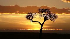 Typical african sunrise with acacia trees in Masai Mara, Kenya, time lapse  - HD stock video clip