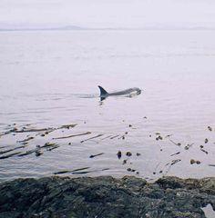 San Juan Island  Washington State - Great ecology, good for kayaking