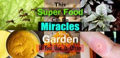 4 Unknown Turmeric Uses That Can Help You In The Garden