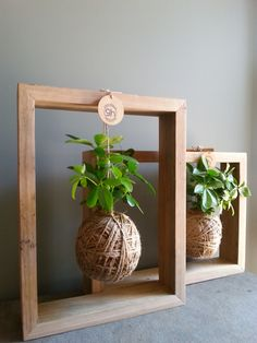 Image of Large Coconut Planter in Timber Hanging Frame