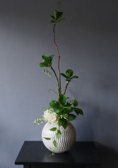 Simple Flowers, Green Flowers, Amazing Flowers, Ikebana Flower Arrangement, Floral Arrangements, Flower Images, Flower Art, Bonsai, Deco Floral