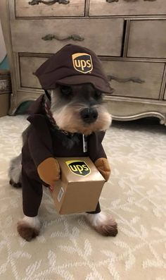 United Parcel Schnauzer delivery