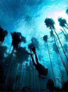 Underwater Forest