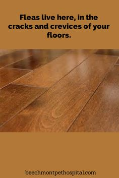 how to get rid of raw egg between floor boards