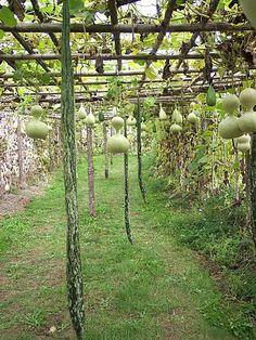 Le jardin de Valmer est au nord de Tours, près de Vouvray. Un temple du légume pour y découvrir des variétés oubliées. Un jolie potager et l'occasion d'y découvrir le jardin des gourdes.